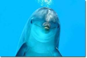 dolphin-main